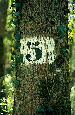 Number on tree trunk - p2686789 by Katarzyna Zommer