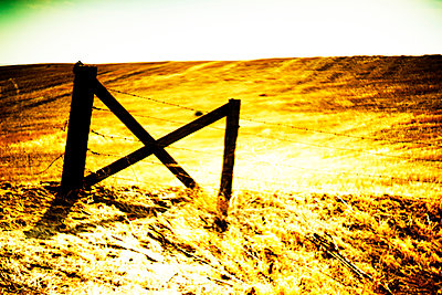 Wood Gate and Barbed Wire Fence along Golden Agricultural Landscape - p694m2218861 by Justin Hill photography