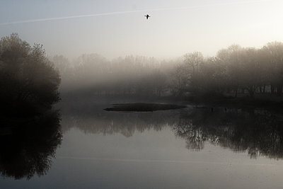 France, Bird over a river - p1402m2222613 by Jerome Paressant
