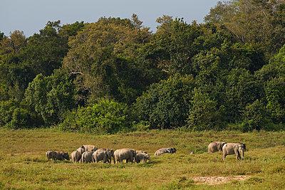 Elefanten - p961m1590763 von Mario Monaco