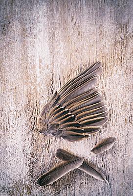 Bird´s wing - p971m1332858 by Reilika Landen