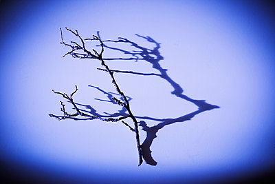 Branch and shadow - p1149m2115799 by Yvonne Röder