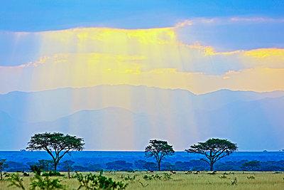 Africa, Uganda, Queen Elizabeth National Park - p652m1487622 by Christian Kober