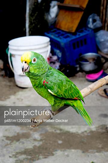 Papagei - p451m1200234 von Anja Weber-Decker