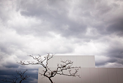 Dead tree in front of the 21st Century Museum of Contemporary Art, Kanazawa, Japan, Asia - p934m1177226 by Dominic Blewett