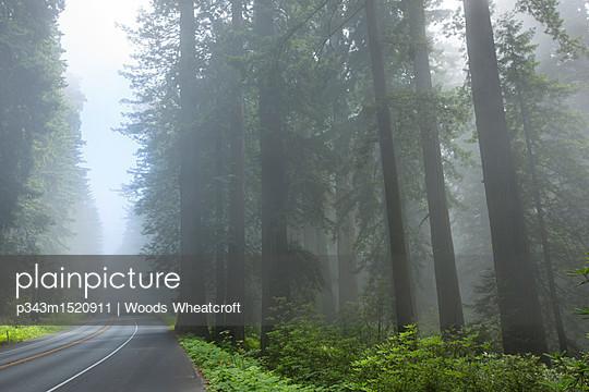 p343m1520911 von Woods Wheatcroft