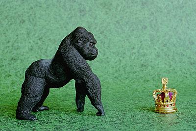 Gorilla vor Krone - p1210m1110497 von Ono Ludwig
