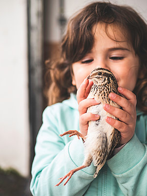 Little girl with quail in her hands  - p1522m2064647 by Almag
