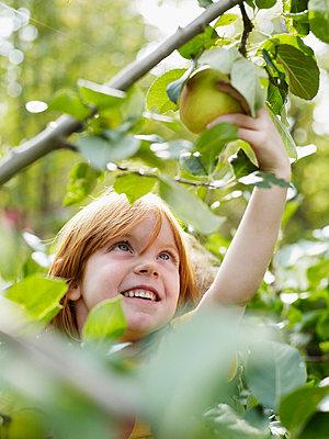 Girl picking up apples - p312m695748 by Fredrik Nyman
