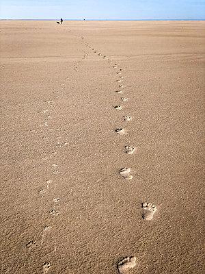 Walking barefoot in the mudflats - p382m2178462 by Anna Matzen