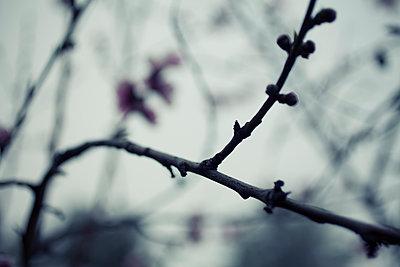 Peach Tree - p495m1215131 by Jeanene Scott