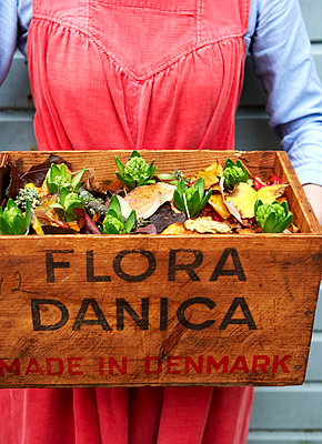 Woman in red corduroy dress holding crate of flowers from Denmark;  Isle of Wight;  UK - p349m920051 by Rachel Whiting