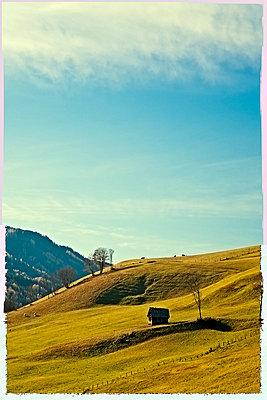 Mountain meadow - p5990135 by Günter Flegar