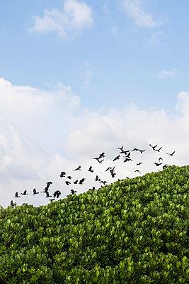 Vogelschwarm - p795m1031505 von Janklein