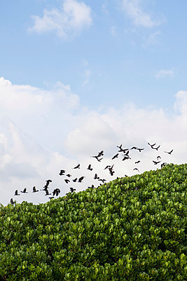 Flock of birds - p795m1031505 by Janklein