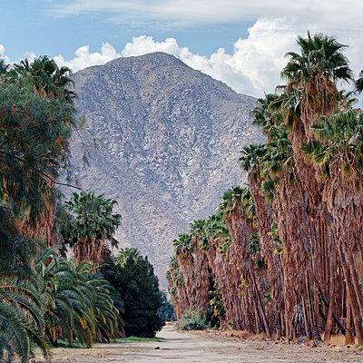 USA, California, Avenue of Palm Trees - p1154m2280942 by Tom Hogan