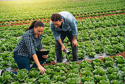 Man and woman with tablet and clipboard in lettuce field - p300m2156556 by Manu Padilla Photo