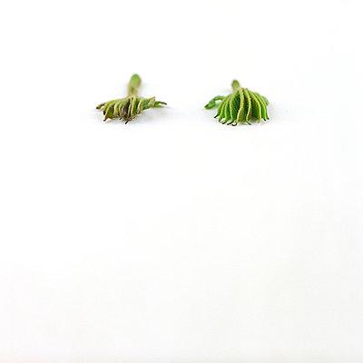 Krallenartige Blätter - p6060139 von Iris Friedrich