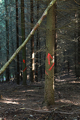 Arrows in a forest - p1040m777071 by Dorothee Hörstgen