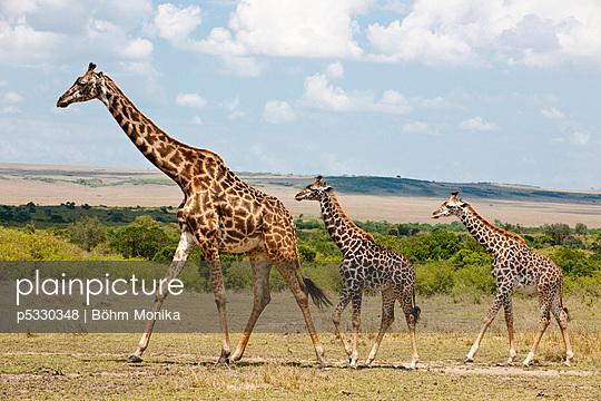 Masai Mara Nationalpark - p5330348 by Böhm Monika