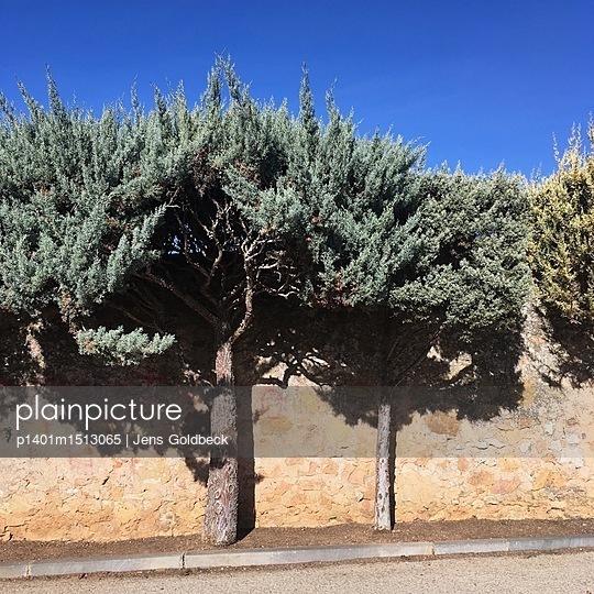 Baum an einer Mauer - p1401m1513065 von Jens Goldbeck