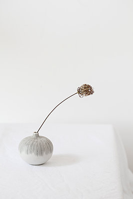 Wild carrot in a vase - p1470m2055110 by julie davenport