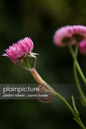 langsam zur Blüte hochkriechen - p045m1169464 von Jasmin Sander