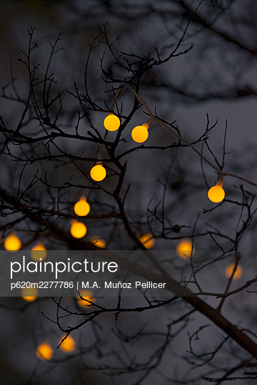 Tree branches with fairy lights at twilight - p620m2277786 by M.A. Muñoz Pellicer