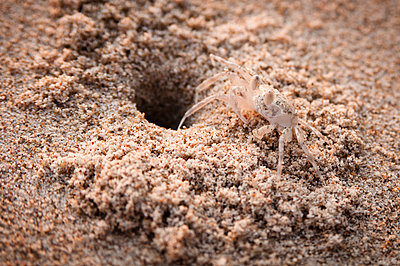 Krebs neben Sandhöhle - p1273m1496180 von melanka
