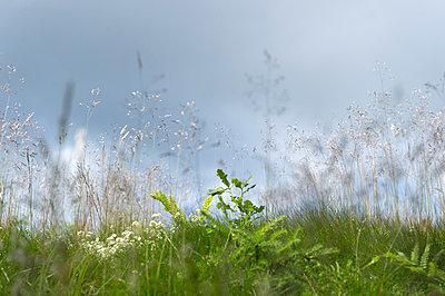 Meadow - p949m948569 by Frauke Schumann