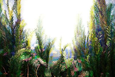 Unterwasserwelt - p4150649 von Tanja Luther