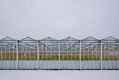 Greenhouse using LED lights, Made, Noord-Brabant, Netherlands - p429m1569371 by Mischa Keijser
