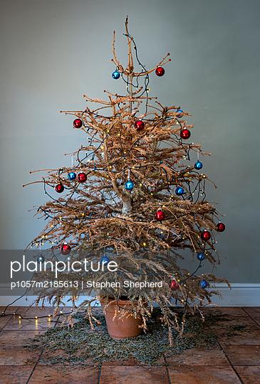 Trister Weihnachtsbaum - p1057m2185613 von Stephen Shepherd