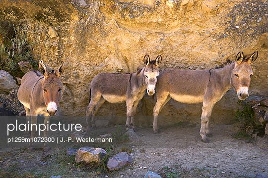 Ausruhen - p1259m1072300 von J.-P. Westermann