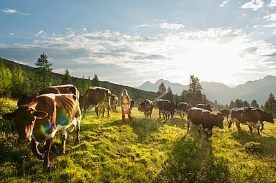 Young woman walking in alpine meadow with cows - p300m659994f by Hans Huber
