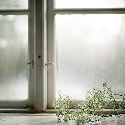 White flowers on windowsill - p312m1024595f by Eveline Johnsson