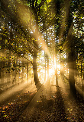 Sunbeams bursting through misty autumnal woodland, Limpsfield Chart, Oxted, Surrey, England, United Kingdom, Europe - p871m1498199 by Lee Frost