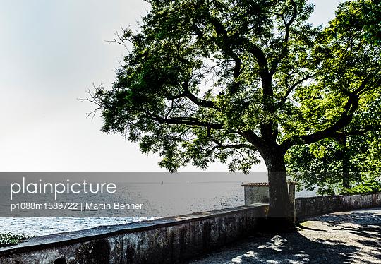 Baum am Ufer - p1088m1589722 von Martin Benner