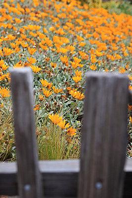 Blumenwiese - p0452752 von Jasmin Sander