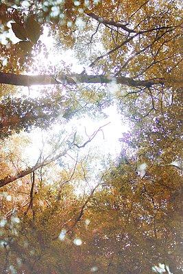 L'automne arrive 03 - p987m2223909 by Célia Swaenepoel