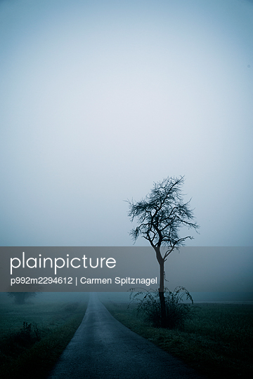 p992m2294612 by Carmen Spitznagel
