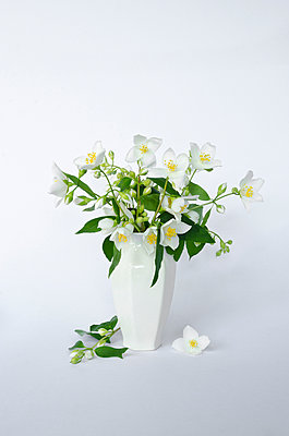 White Flowers in White Vase - p1562m2187011 by chinch gryniewicz