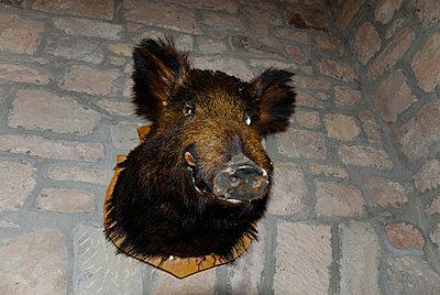 Wildschwein an der Wand - p260m859678 von Frank Dan Hofacker