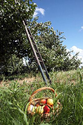 Fruit crops - p4060364 by clack