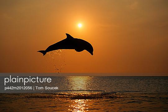 p442m2012056 von Tom Soucek