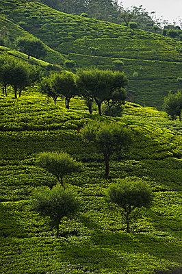Hügeliges Grünland mit Bäumen - p1259m1111488 von J.-P. Westermann