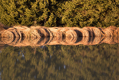 Reflection in a pond - p1682m2287991 by Régine Heintz