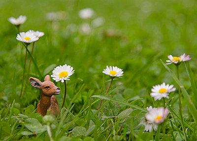 Deer in between daisies - p7580063 by L. Ajtay