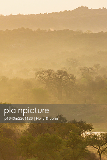Trees and river in the morning fog, South Africa - p1640m2261126 by Holly & John