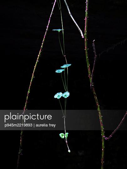 Blackberry bush and leaves - p945m2219893 by aurelia frey
